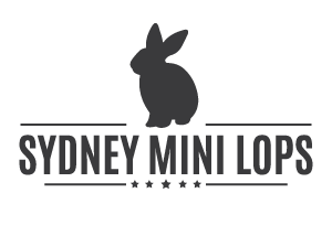 Sydney Mini Lops - Sydney Bunnies for Sydney Families